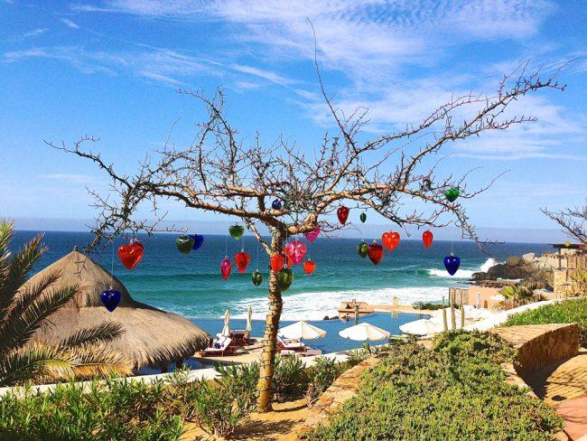 A Glance at…Cabo Wabo
